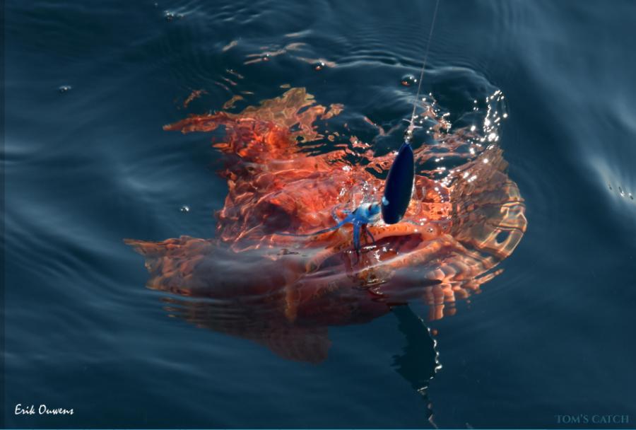 Fishing Charter Chasing Blue