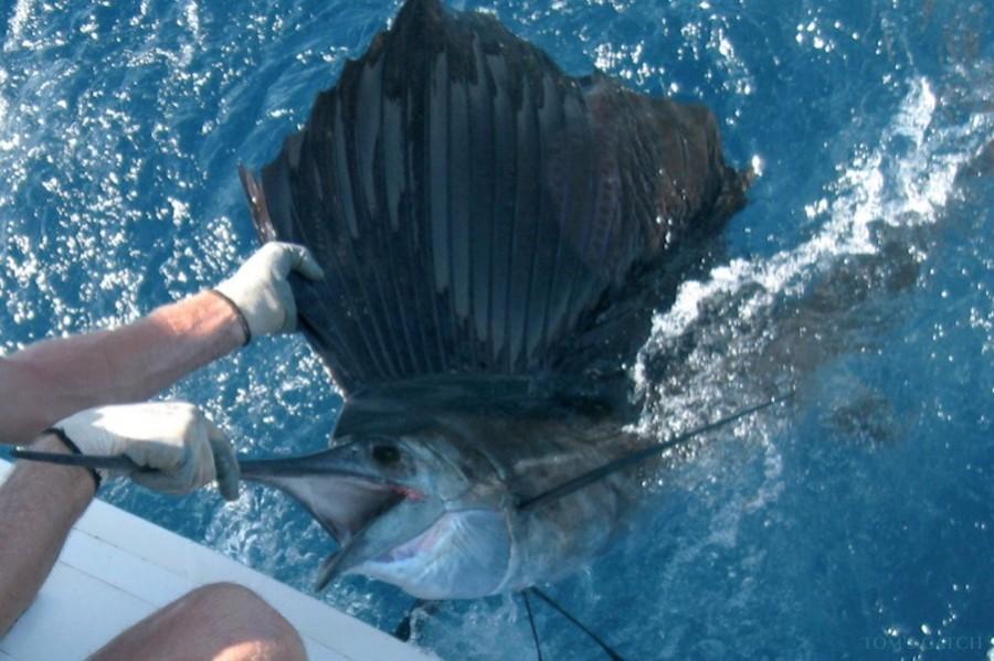 Fishing Charter Elias I