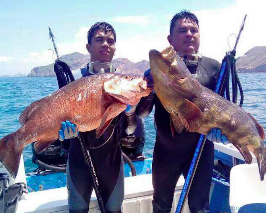 Fishing Charter Escualo V