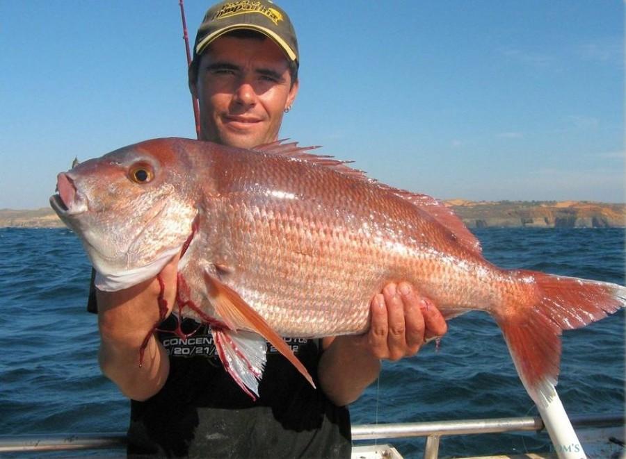 Fishing Charter Faeton Moraga 980