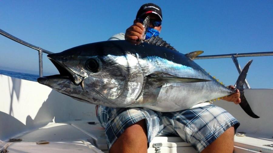 Fishing Charter Flyer 650