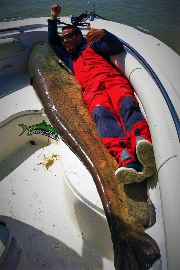 Fishing Charter Green Flake