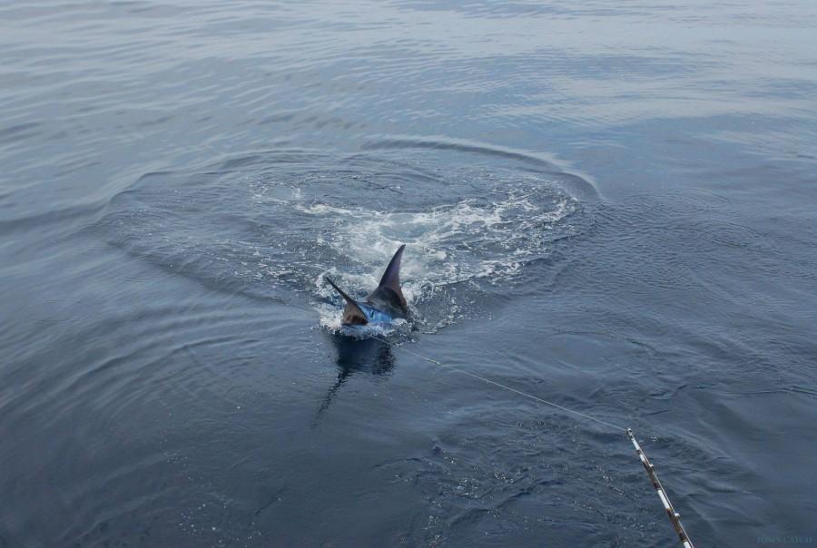 Fishing Charter Katjoa