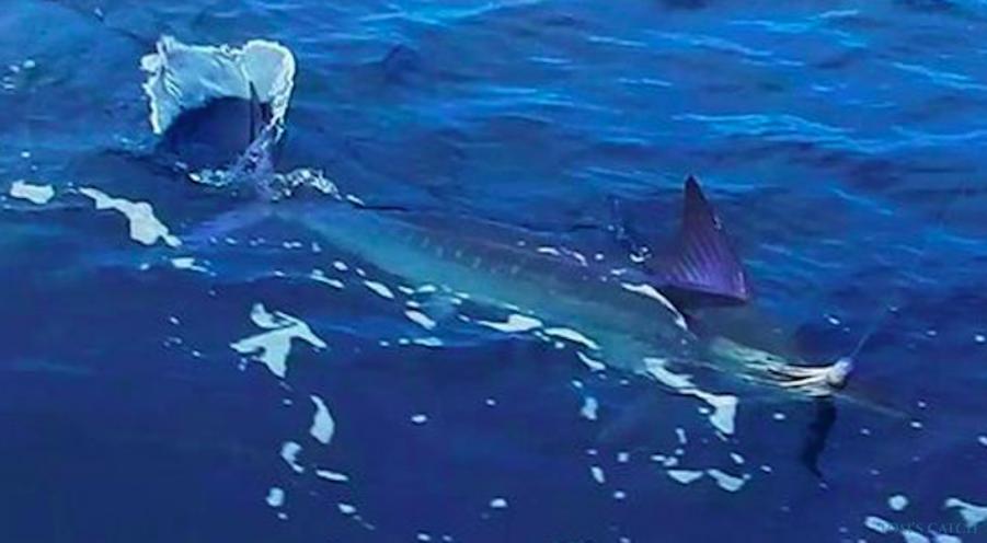 Fishing Charter Margarita V