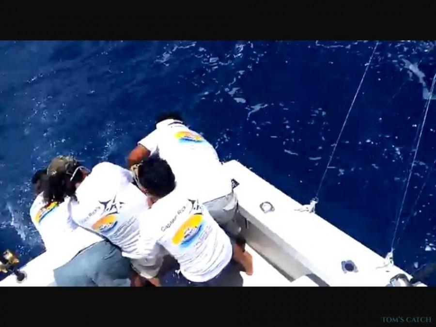 Fishing Charter Marlin Magic