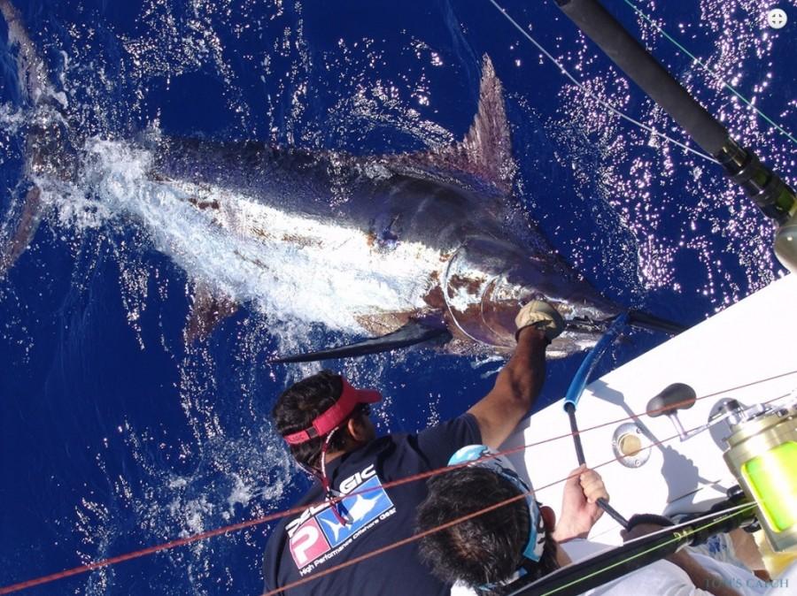 Fishing Charter Noalex