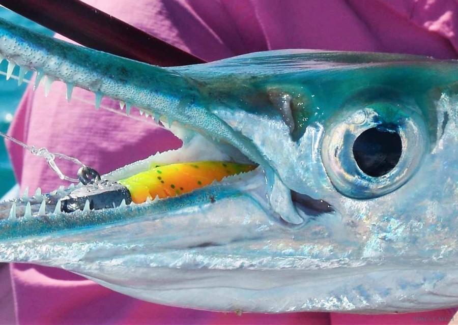 Fishing Charter Reel Addiction