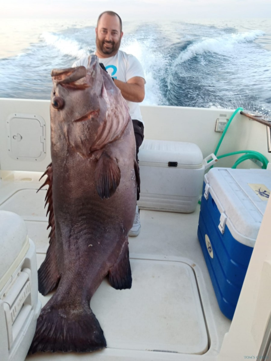 Fishing Charter Rodman 870