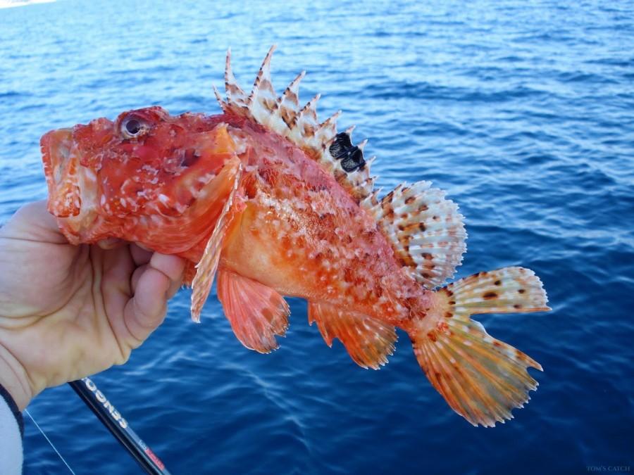 Fishing Charter Royal Charters Mallorca