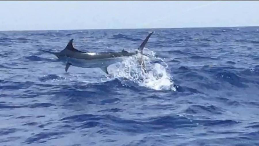Fishing Charter Tease Me Sportfishing