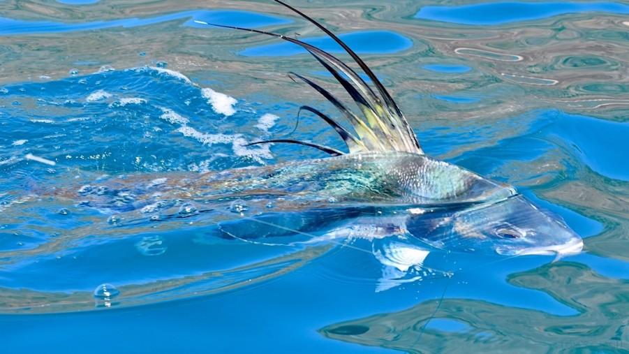 Fishing Charter Topless II