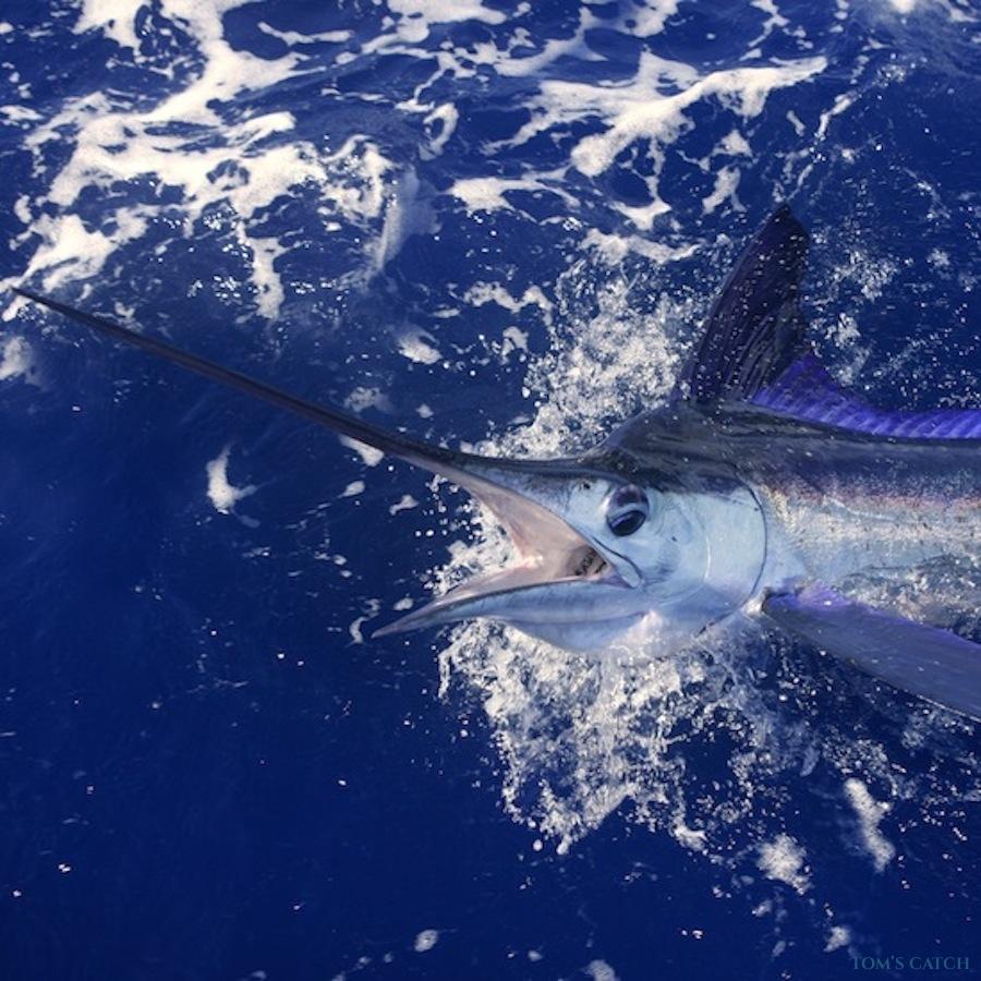 Fishing Charter Xacara