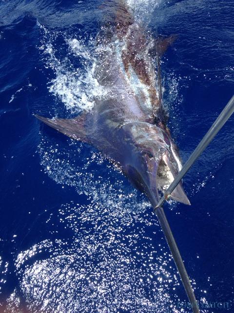 Fishing Charter Xareu
