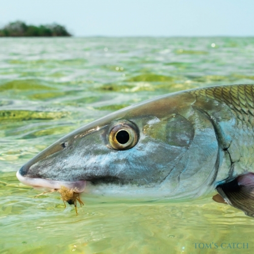 Sea Fishing in Punta Cana - Find and Book your Charter