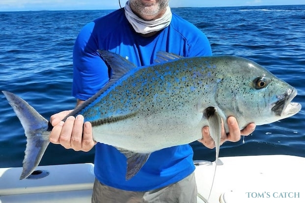Bluefin trevally fishing