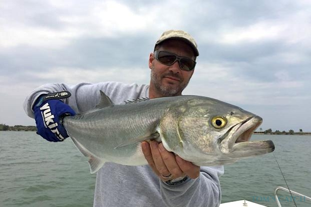 Bluefish fishing