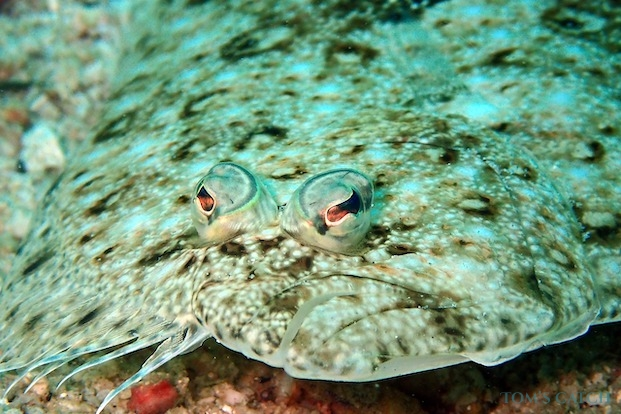 Flounder fishing