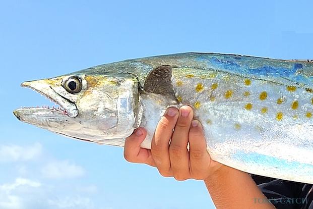 Spanish Mackerel fishing