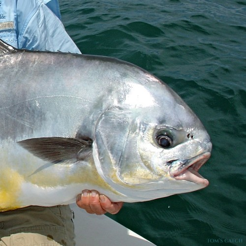 Sea Fishing in Baja California Sur - Find and Book your