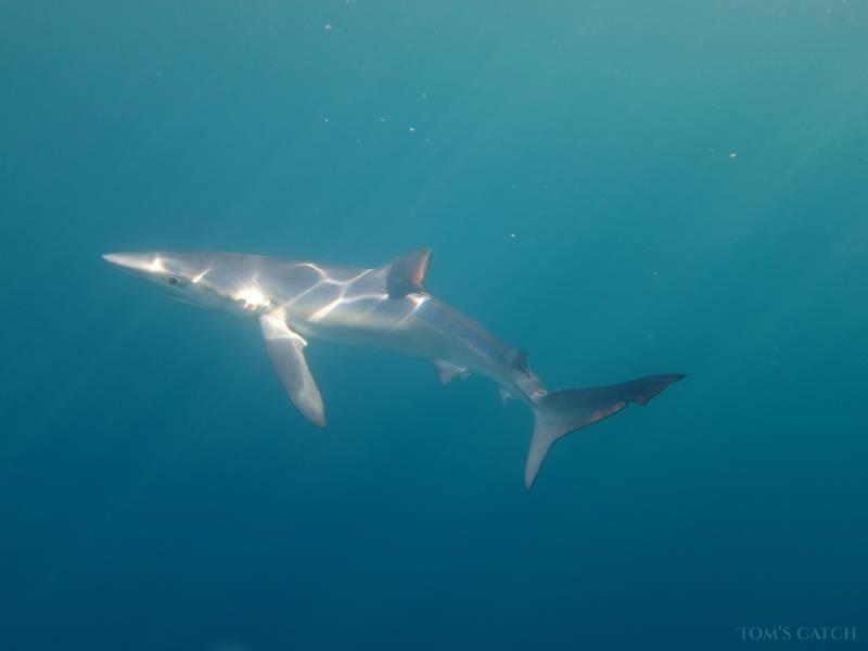 Charter de pêche Abyss