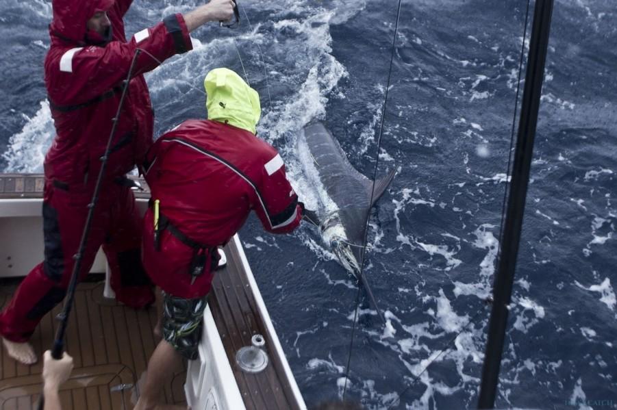 Charter de pêche Ambition Game Fishing Charters
