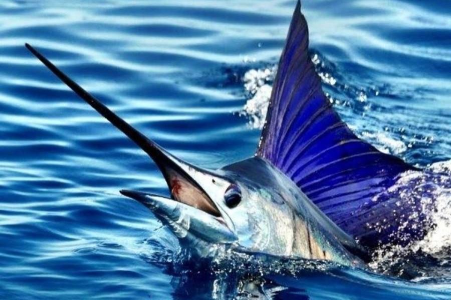 Charter de pêche Bertram 35