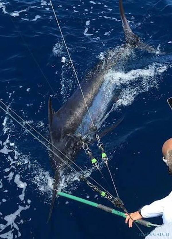 Charter de pêche Bertram