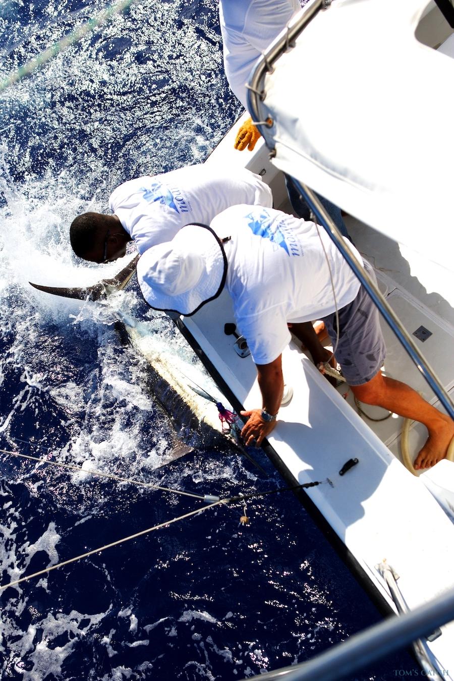 Charter de pêche Bertram JPH