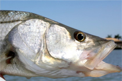 Charter de pêche Black Marlin