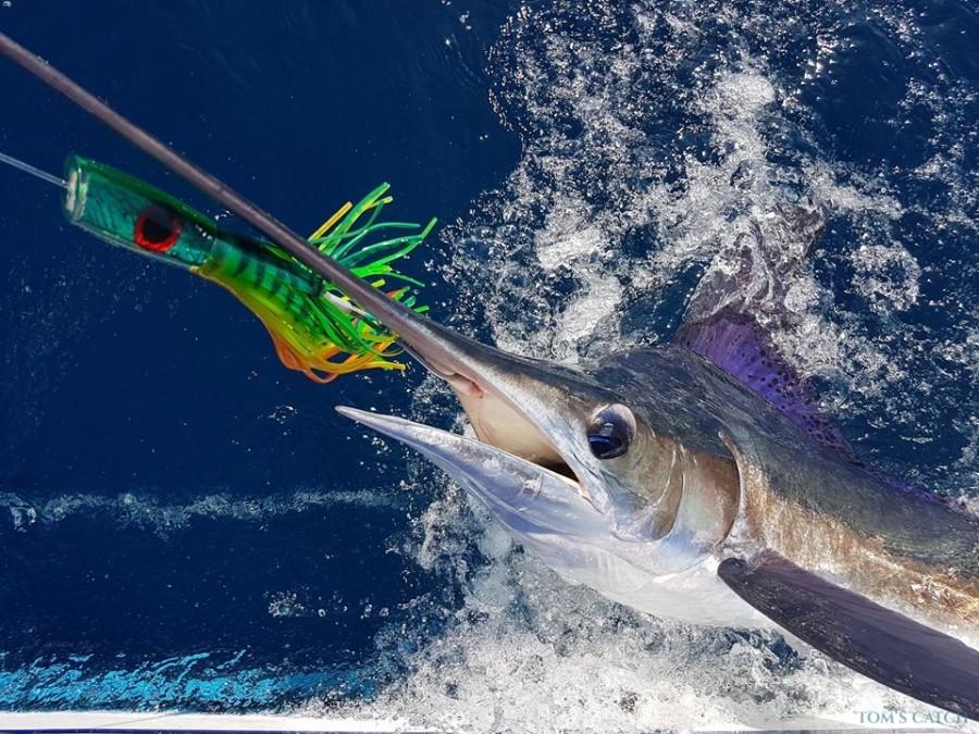 Charter de pêche Blue Rampage