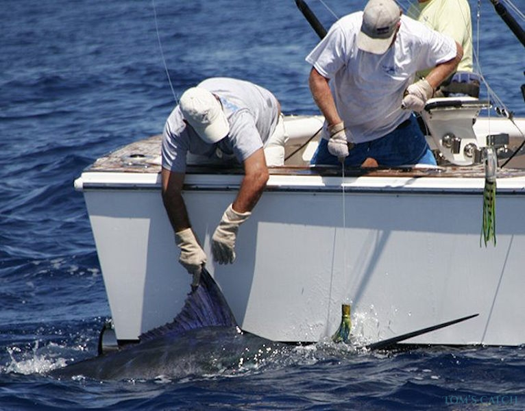 Charter de pêche Boca Raton