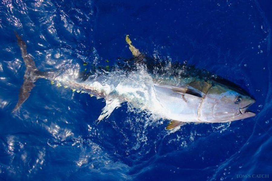 Charter de pêche Bonito