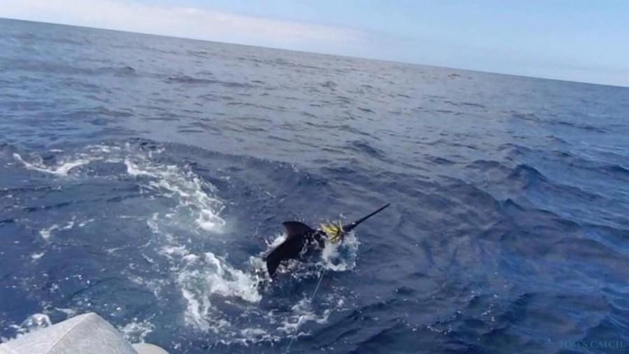 Charter de pêche Cal Rei