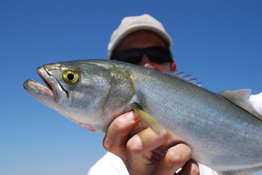 Charter de pêche Cap Camarat 635