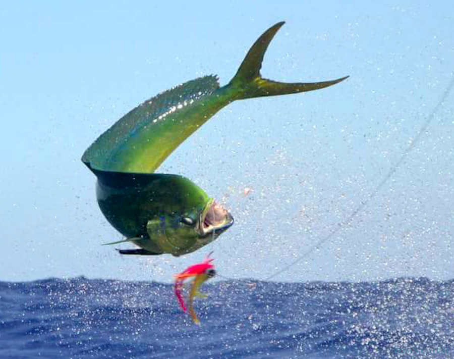 Charter de pêche Club 1034 Lady Diana