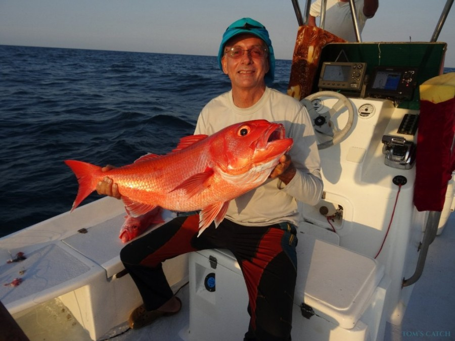 Charter de pêche Dolphin