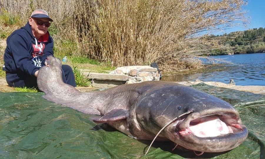 Charter de pêche Ebro Dream Fishing I