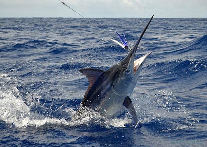 Charter de pêche Flipper 7