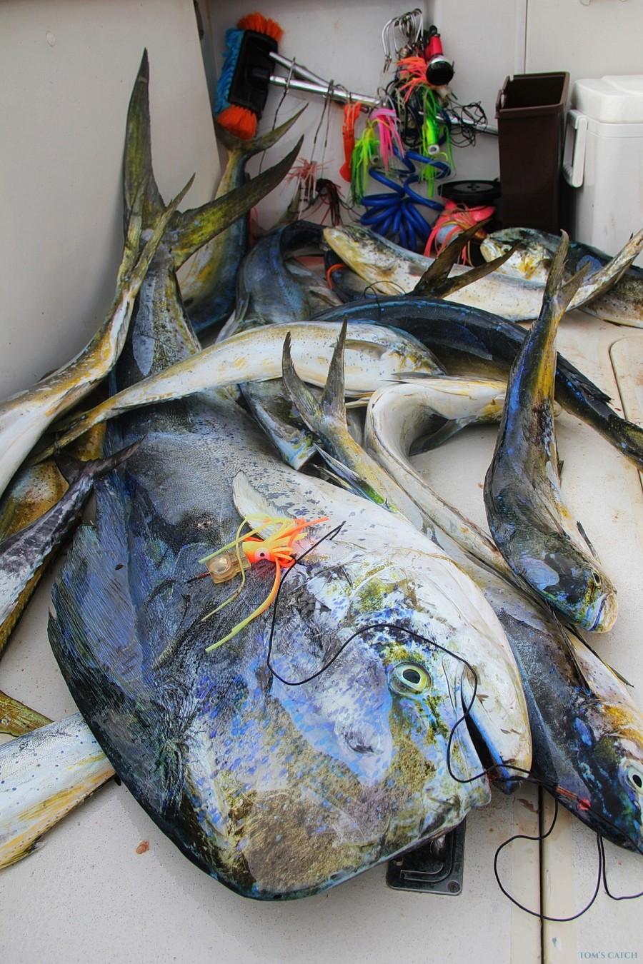 Charter de pêche Fortuna