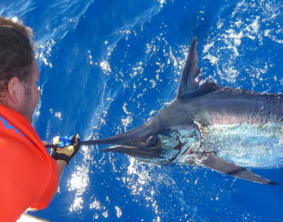 Charter de pêche Gavito Fishing