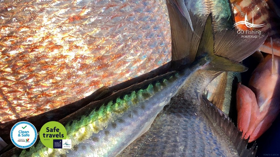 Charter de pêche GO Fishing Adventure