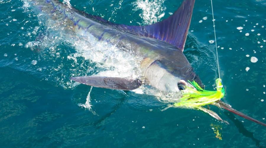 Charter de pêche Hatteras 45 FT