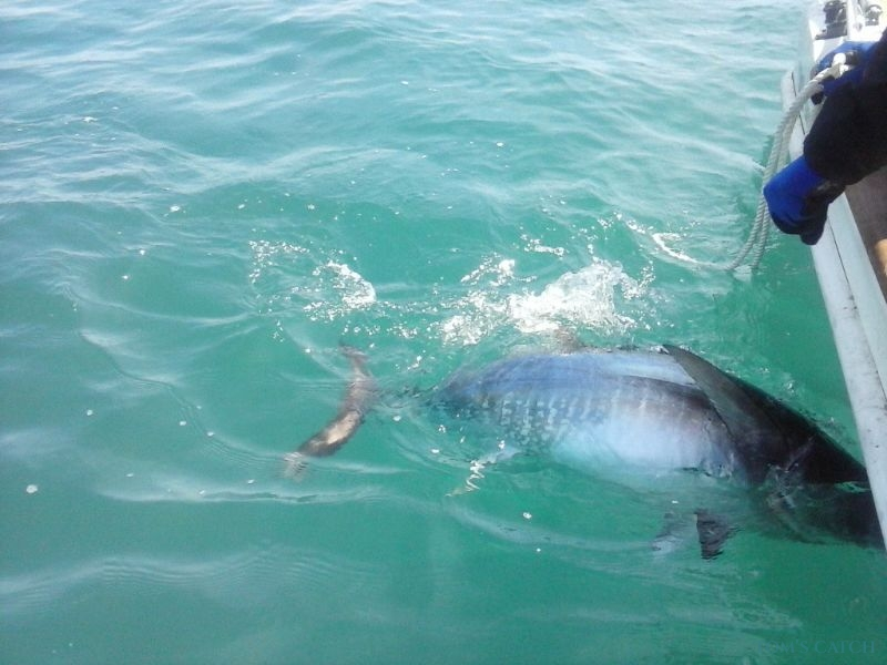 Charter de pêche Key Largo 25