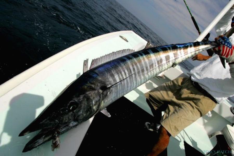 Charter de pêche Lilly-M