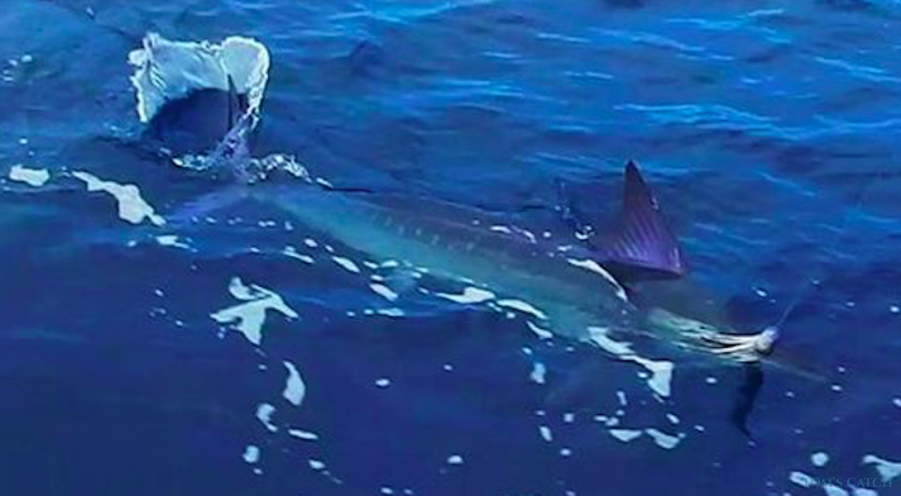 Charter de pêche Margarita V