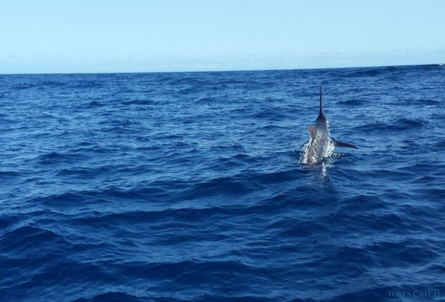 Charter de pêche New Felusi