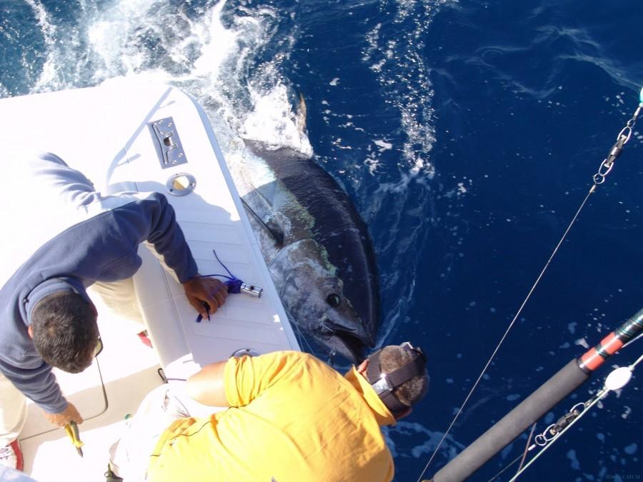 Charter de pêche Noalex