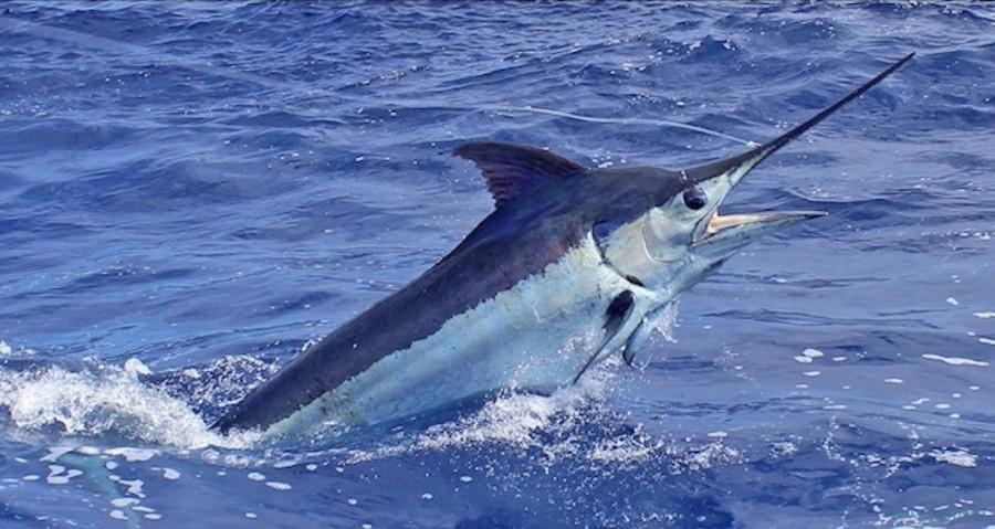 Charter de pêche Nola