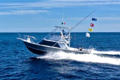 Ole Ole Baja California Sur pêche