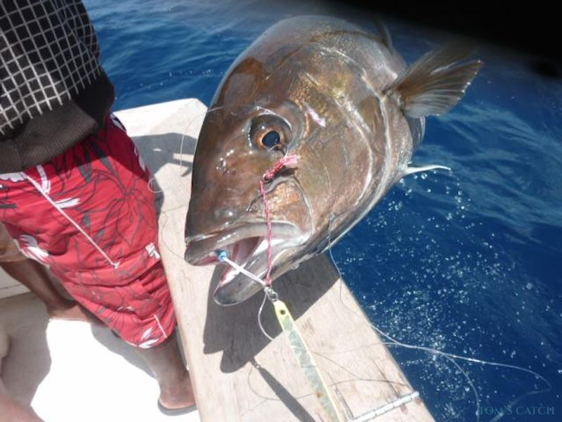 Charter de pêche Pace 40